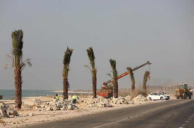 تدابیر مثبت شرکت عمران با کاشت ۴۰۰ نخل در نوار ساحلی کیش